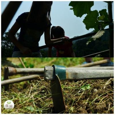 Backyard_farm_A_02